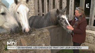 LE FEUILLETON : En Mayenne les chevaux de trait ont leur château