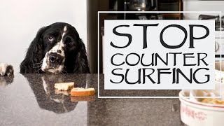 How To Stop Your Dog From Getting On The Counter  You Ask We Answer: Episode 38 Question 4