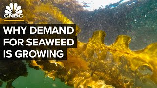 Why Demand For Seaweed Is About To Boom