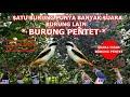 Satu Burung Punya Suara Burung Lain Suara Isian Burung Pentet  Mp3 - Mp4 Download