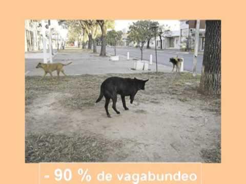 educación para el control animal (puerto santa cruz)
