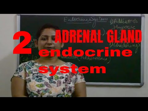 Adrenal Gland(EASY EXPLANATION)