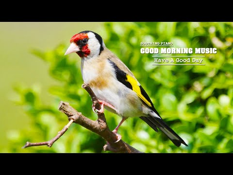 Good Morning Music 🌿Classical Music For Relaxation, Stress Relief, Study and Meditation Music