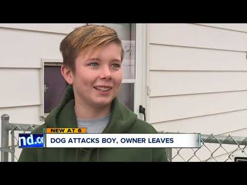Brooklyn boy bit by dog while walking home from school, parents upset owner left without helping