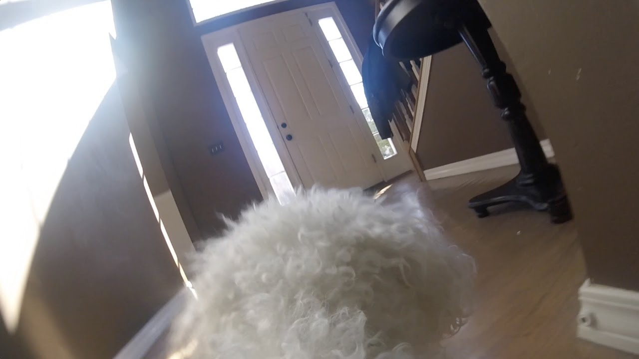 Gopro On My Dog Left Home Alone Heartbreaking Youtube