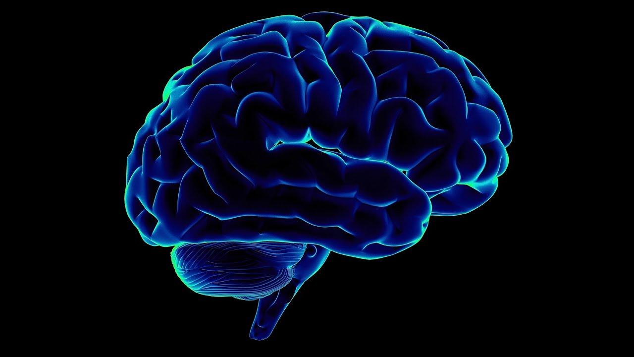 Мозг человека в картинках с надписями, картинки