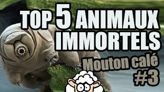 Les ANIMAUX IMMORTELS - Mouton calé #3