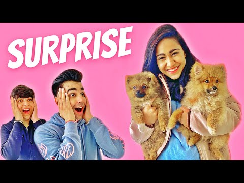 SURPRISING MY DOG WITH MY BROTHER & SISTER | Rimorav Vlogs