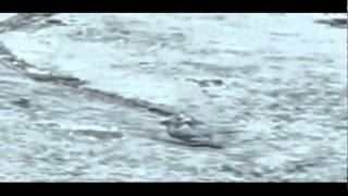 Repeat youtube video ตัวประหลาด เลื้อยบนน้ำแข็ง!