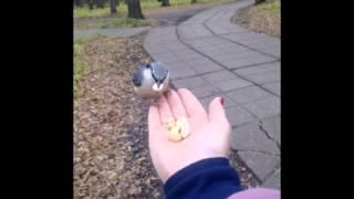 Животные и птицы средней полосы России
