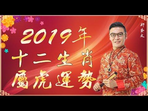 2019年十二生肖属虎运势