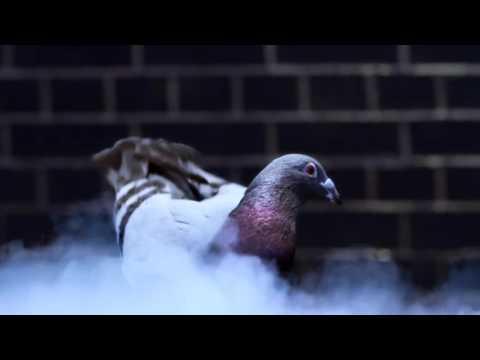 DJ TWIN - GHETTO BIRD