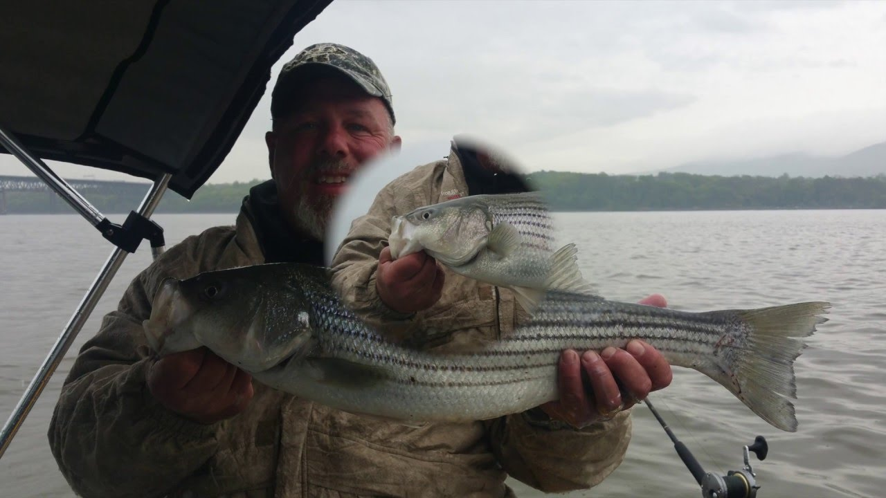 Striper fishing the hudson river in newburgh new york 5 14 for York river fishing report