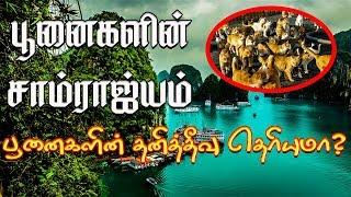 Cat Island | பூனைகளின் சாம்ராஜ்யம் | பூனைகளின் தனித்தீவு தெரியுமா? | Cat Island Japan