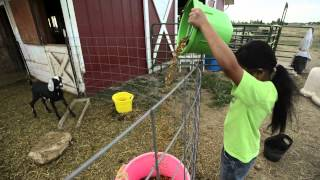 Farm Life in Berthoud