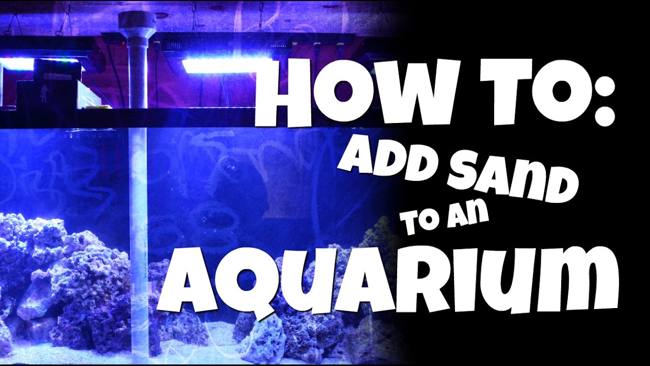 how to add sand to an aquarium youtube