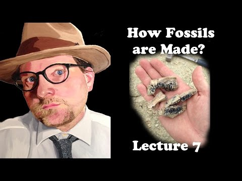 Lecture 7 How fossils are made?