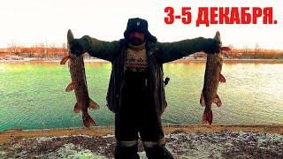 Рыбалка Хищник на Живца в Декабре по Открытой Воде Двое суток на реке с Больничкой и Финой