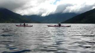 Kayaking with Orcas , Queen Charlotte Sound, New Zealand