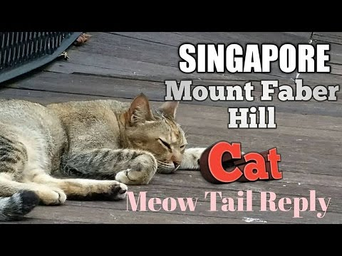 Singapore Mount Faber Hill Cat Use it tail reply me 😀