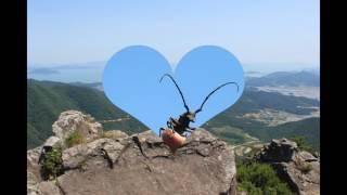 산석등산 아미봉 626봉(일림산) 일림산(삼비산) 곰치…