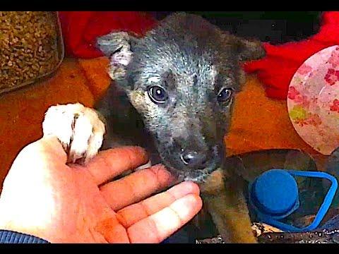 Подобрали бездомного щенка на Пасху ЧАСТЬ 2
