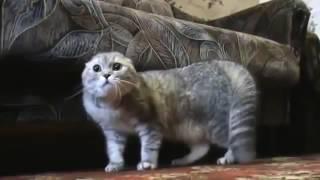 злой кот и его ругань