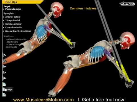 Push Up Anatomy - YouTube
