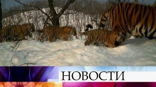 видео Земля Леопарда под прицелом