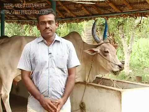organic farming by nithyanandam(Makkal tv)