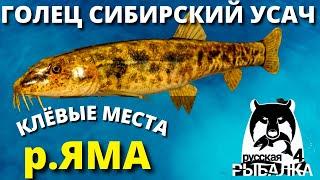 ГОЛЕЦ СИБИРСКИЙ УСАЧ река ЯМА ФАРМ РУССКАЯ РЫБАЛКА 4 Russian Fishing 4 РР4