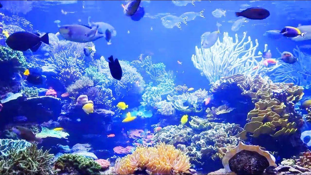 Download Aquarium magnifique + musique zen, relaxation, bien-être, relaxante' - Récifs de corail et poissons