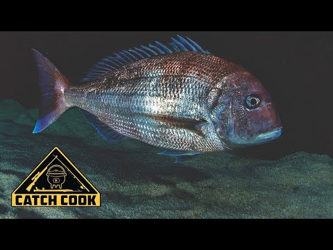 Offshore fishing in Mossel Bay | South Africa | Catch Cook