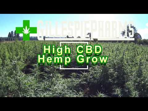 Oregon Grown High CBD Hemp Field: Visit to 5+ Acre Field.