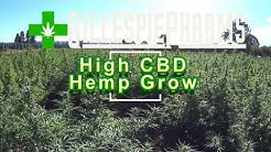 Oregon Grown High CBD Hemp Field: Visit to 5+ Acre Field.