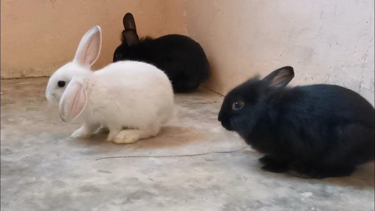 invasión de conejos en casa - invaden mi casa los conejos