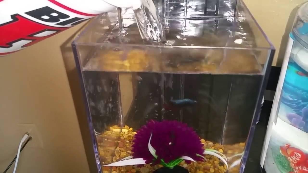 Easy Clean Aquarium In Action