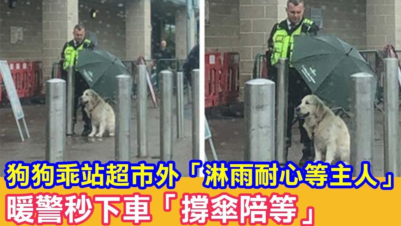 狗狗乖站超市外「淋雨耐心等主人」暖警秒下車「撐傘陪等」 狗狗故事