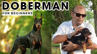 Best DOBERMAN Pinscher   The Guard & Watch Dog Facts | Smartest Dog in the World | Baadal Bhandaari