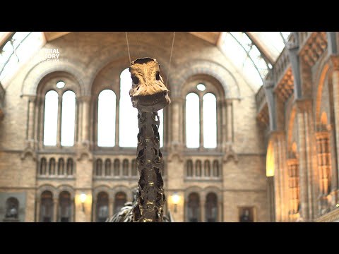 Taking Dippy down: the first steps | Natural History Museum