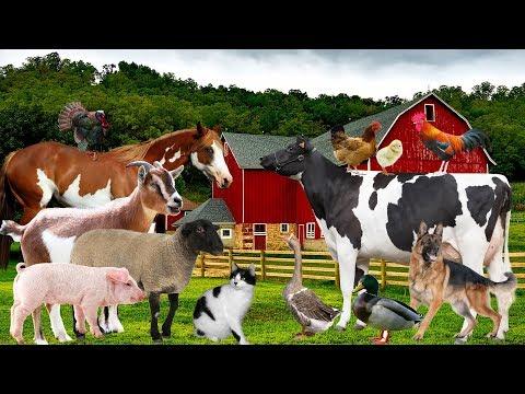 Farm animals and sound | Baby education videos, toddlers, preschool children