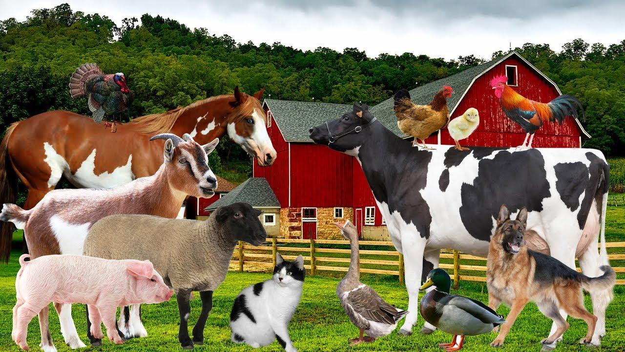 Download Hewan ternak dan suara | Video pendidikan Bayi, balita, anak anak prasekolah | Tokek