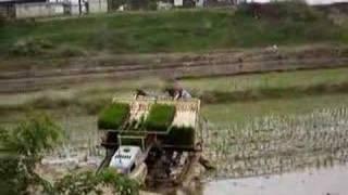 Planting Rice in Korea