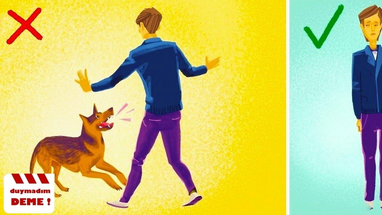 Bir Köpek Size Saldırdığında Ne Yapmalısınız ?