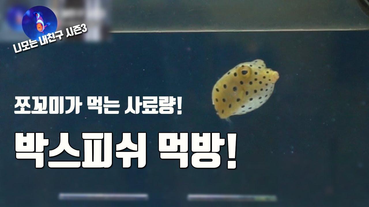 해수어 박스피쉬 물고기 먹방입니다. [니모는 내친구 시즌 3-35]