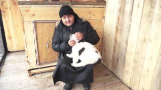 Как правильно взаимодействовать с щенком азиатской овчарки.
