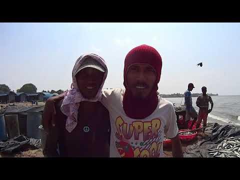 Negombo Fish Market Trip: Intense Experience. Sri Lanka
