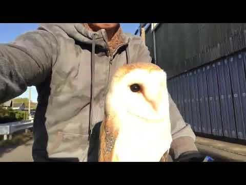 JT - A Bike Riding Owl