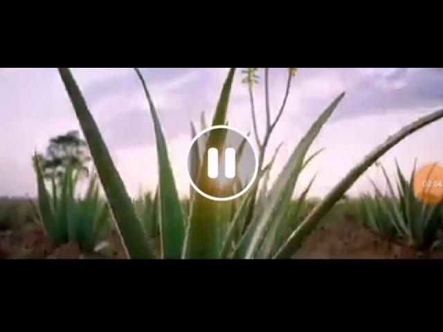 Largest Aloe Vera Farm in the USA