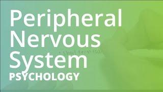 Peripheral Nervous System | Psychology (PSYC101)